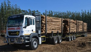 This is the latest PBS vehicle in the timber industry. Operated by Timber Logistics, the excellent manoeuvrability of the combination is due to the fact that both tridem axle units include a passive steering axle.