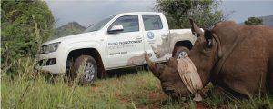 amarok-rhino