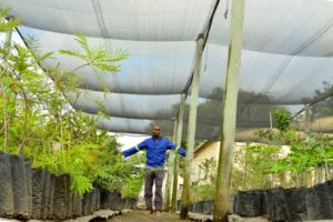 The nursery, which is now fully managed and operated by members of the Nkomazi community under nursery manager Nicholas Mhlanga seen here, also serves as a social economic development project for the Thembalethu community.