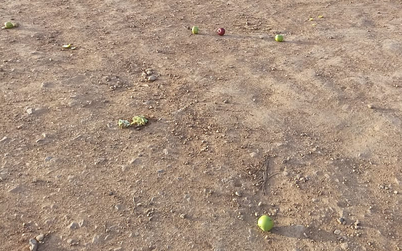 Despite the fact that there were a number of apples lying in the dirt getting squashed by vehicles or just sitting there rotting in the sun, the two apples the driver asked for - and offered to pay for - were refused him.